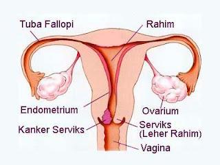 kanker serviks, kanker mulut rahim, kanker leher rahim, obat kanker serviks, obat kanker mulut rahim, obat kanker leher rahim