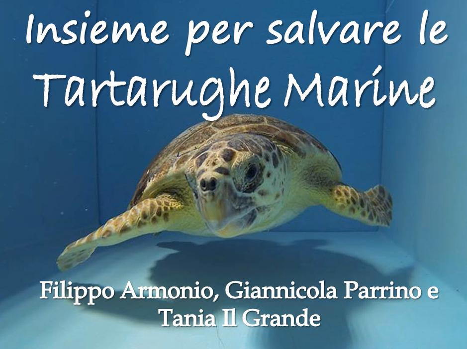 Entomologando insieme per salvare le tartarughe marine for Tutto per le tartarughe