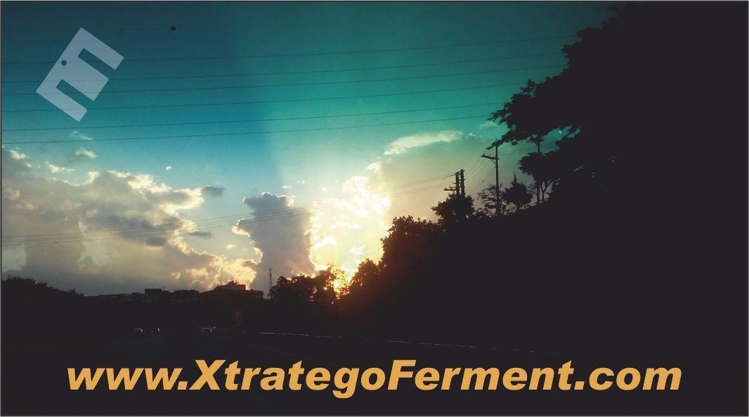 Xtratego Ferment