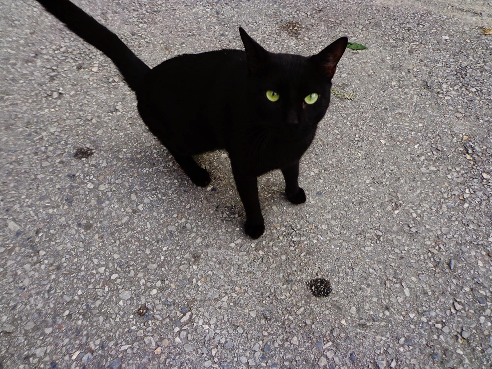Черный-Кот-в-Салониках