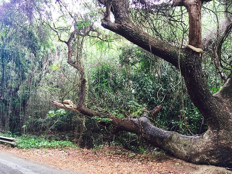 St. Croix Rain Forest