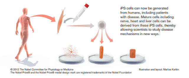 iPS cell uses