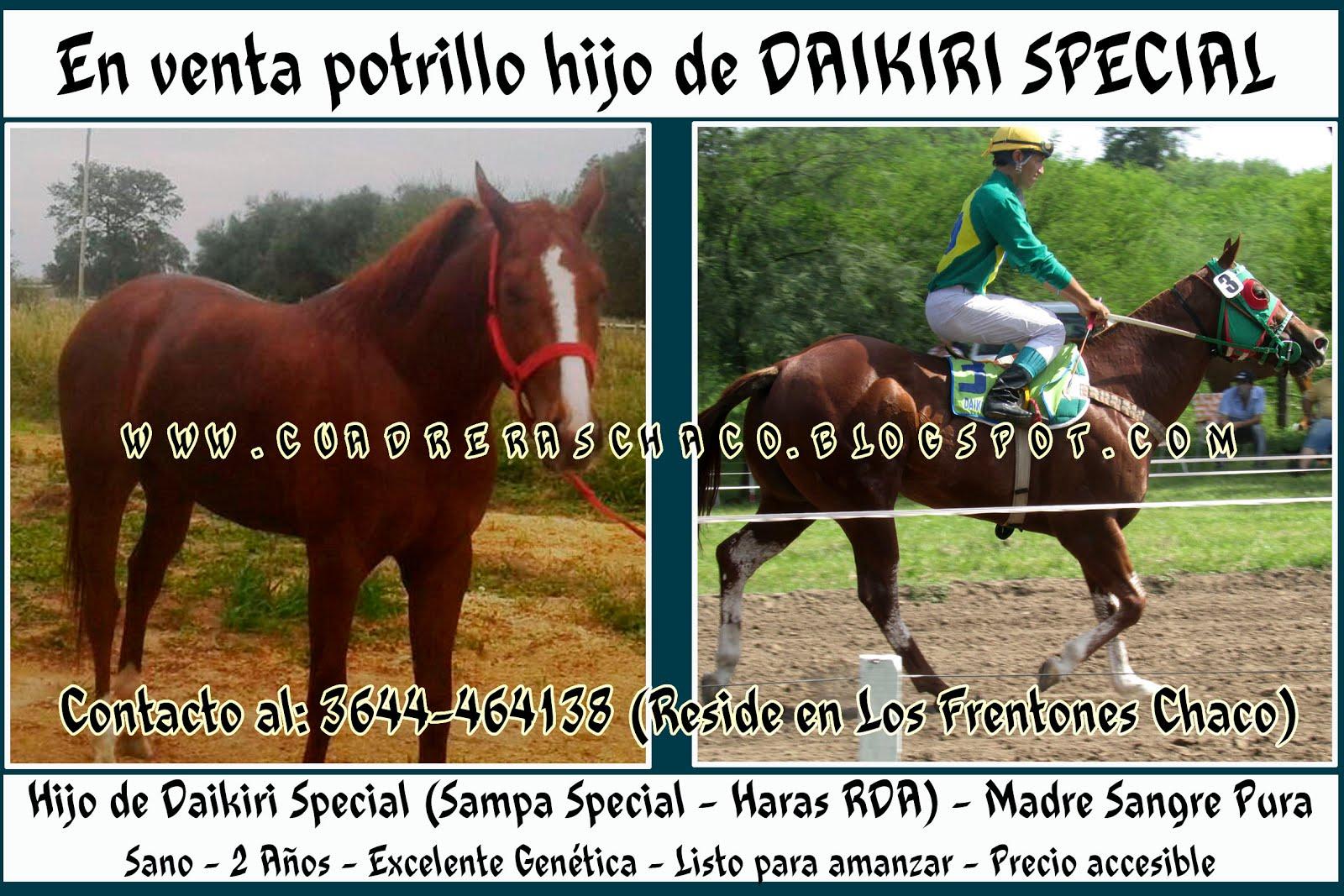venta potrillo daikiri 7-5-16