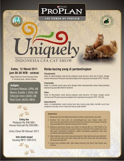 CFA cat show, indonesia cat show, Uniquely Indonesia CFA Cat Show, kontes kucing, lomba kucing