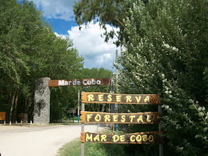 MAR DE COBO