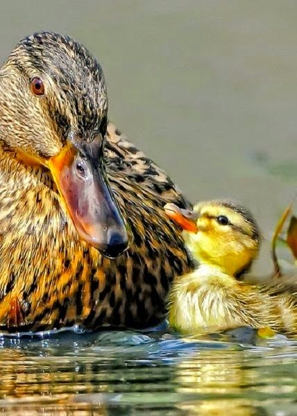 Beautiful Mother and Child Picture