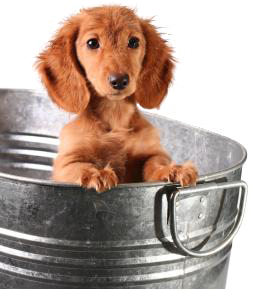 puppy in a steel bucket