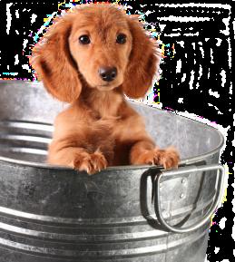 puppy in a steel bucket