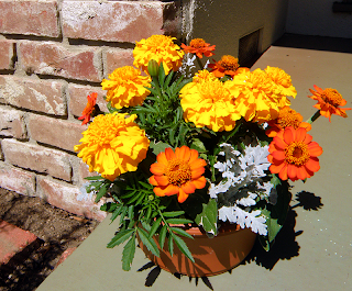 Marigolds in Pot on Front Steps