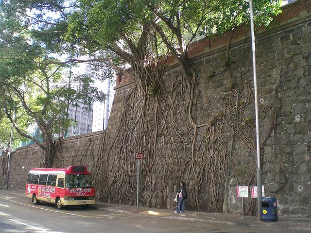 Raízes crescem sobre muros de Hong Kong