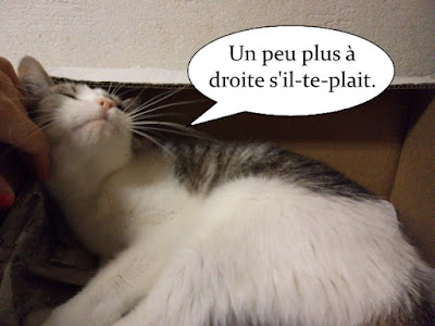 Jolie chatte de l'école du chat libre de toulouse.