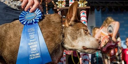 A 10 years old dog called Quasi modo won $1500 for the competition of the World's Ugliest Dog 2015