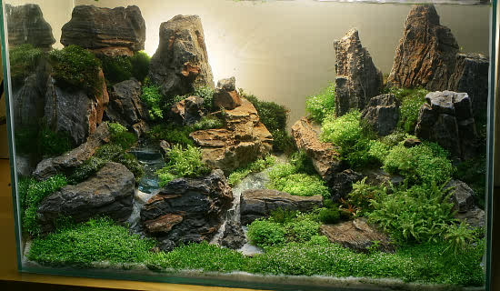Aquarium fish aquascaping for fish aquarium Aquarium landscape