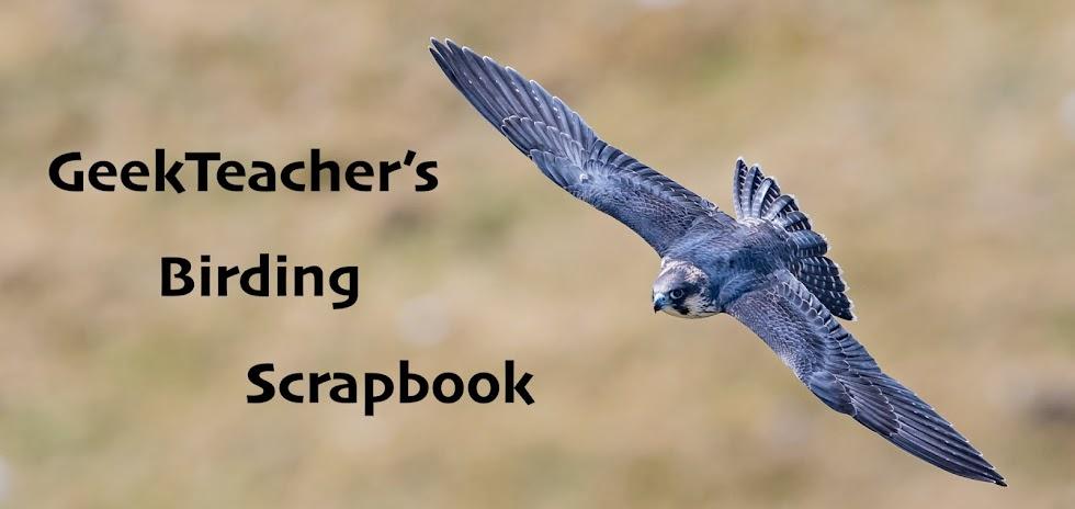 GeekTeacher's Birding Scrapbook
