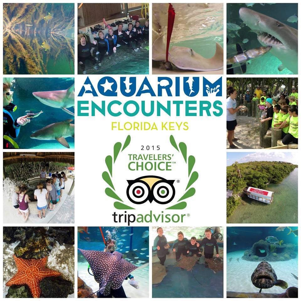 Humans Of The Keys Aquarium Encounters Update