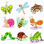conozcamos sobre los insectos
