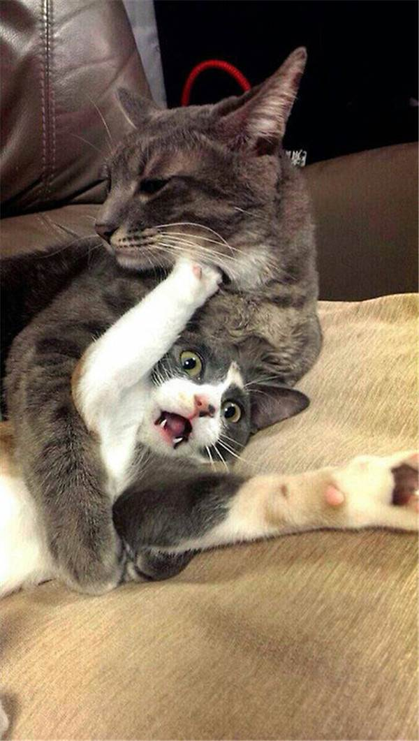 Funny cats - part 185, funny cat picture, cat photo, best cat photos