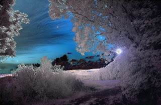 night blue sky glimpsed through snow covered trees