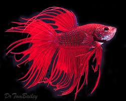 Fish n tips for Lifespan of a betta fish in captivity