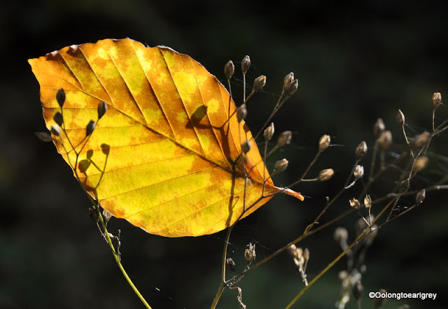 Autumn leaf, Forest, Germany