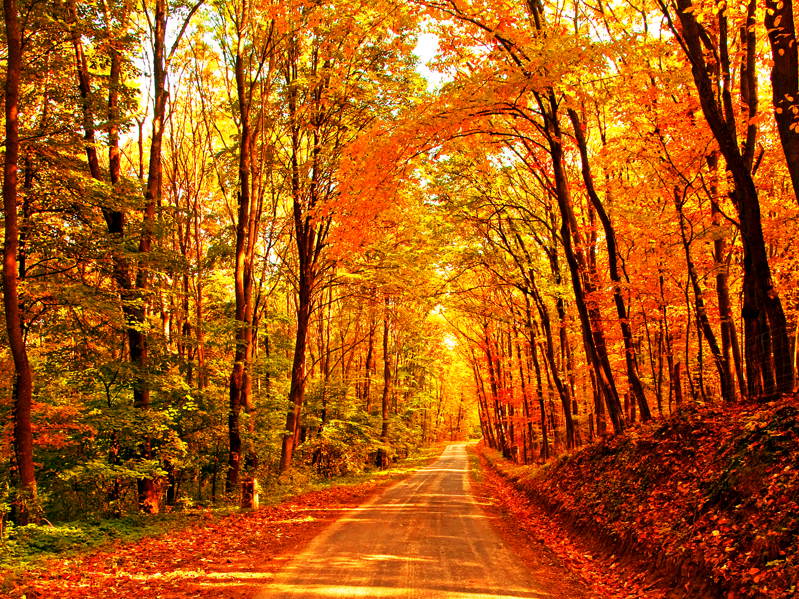September fall wallpaper the pity party wealthy republicans conservatives have been trying to sell two conflicting narratives in the last three years and the oxymoronic nature of those narratives might have started voltagebd Images