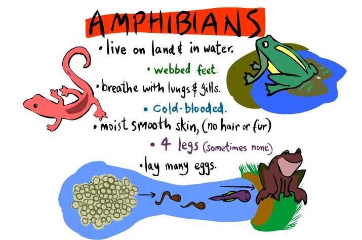 reptiles & amphibians.