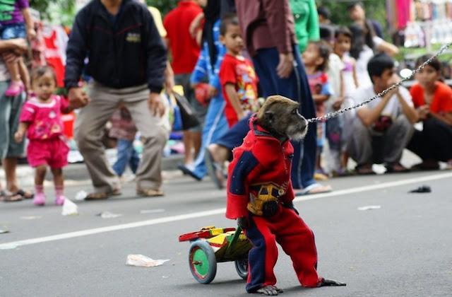 Kisah abu nawas : Siasat Menaklukkan Monyet