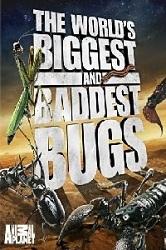 Thế Giới Côn Trùng Khổng Lồ Và Nguy Hiểm - The World's Biggest And Baddest Bugs