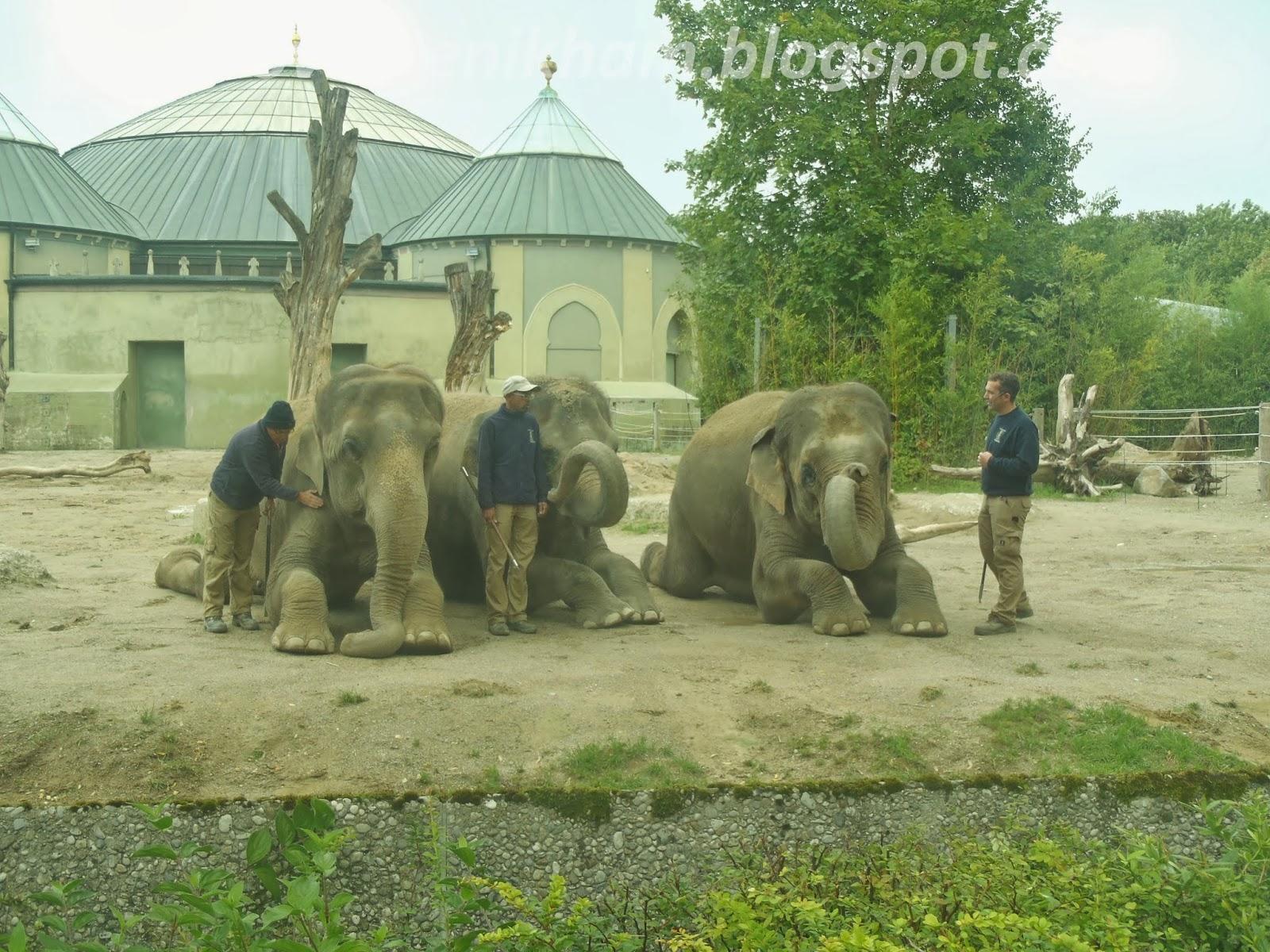 zoo mnichov