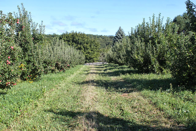 Westward Orchards