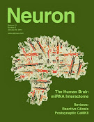 The Human Brain miRNA Interactome