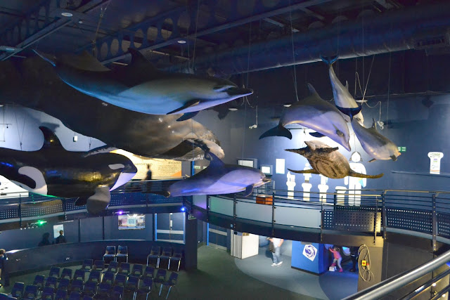 Model whales suspended from the ceiling inside the National Marine Aquarium in Plymouth