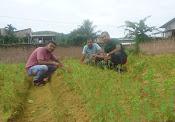 3 Stevia Farmar