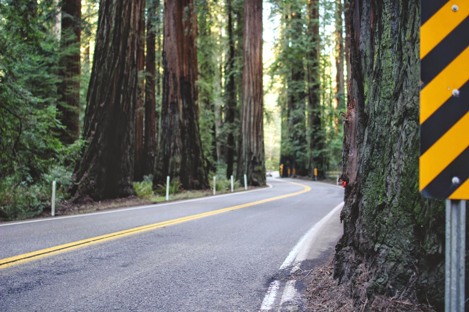 Thetravelingteacher chandelier drive thru tree california as its name suggests the chandelier tree is a hollowed redwood large enough for a car to pass through i was pleased to discover that we were only one of mozeypictures Image collections