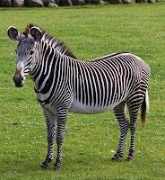 Google Zebra- SMO Update