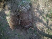Tampungan siap tanaman, akar sudah tembus