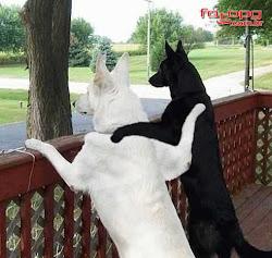 Até os cachorros entendem...