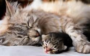 eta gatto-uomo uomo-gatto