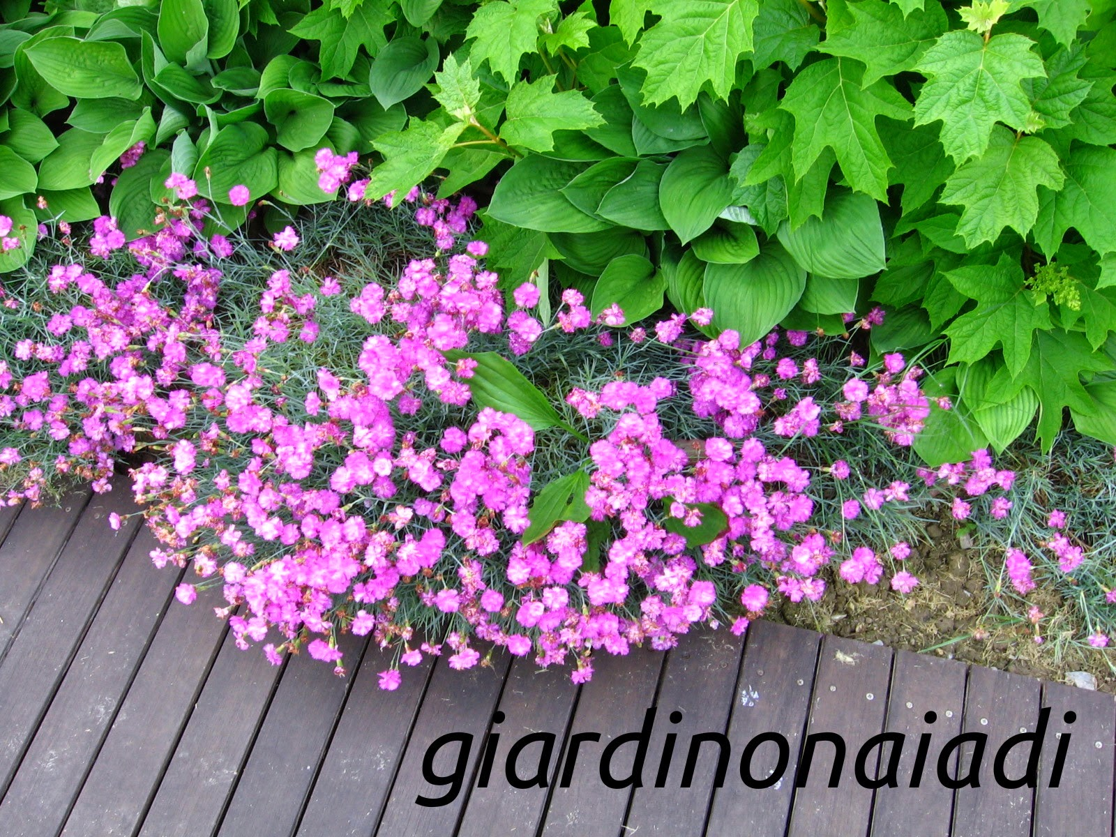 Il giardino delle naiadi butterfly garden creare un for Arbusti fioriti da giardino