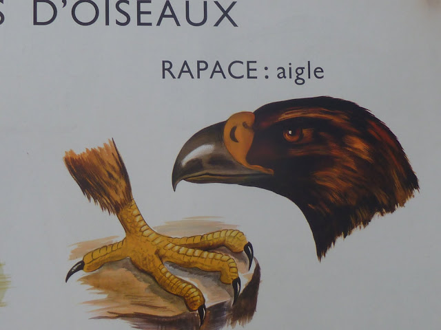 Vintage french bird duck eagle heron posters animal snakes