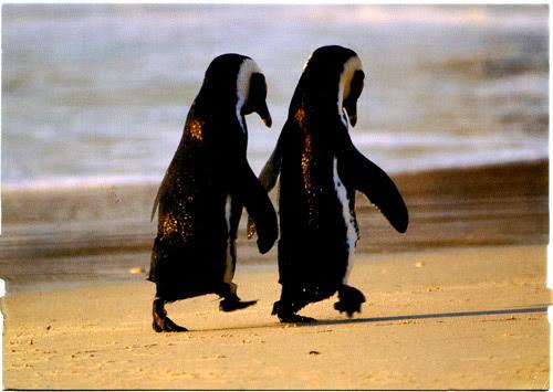 Penguin Couple Drawing Cute Beautiful Penguin hd