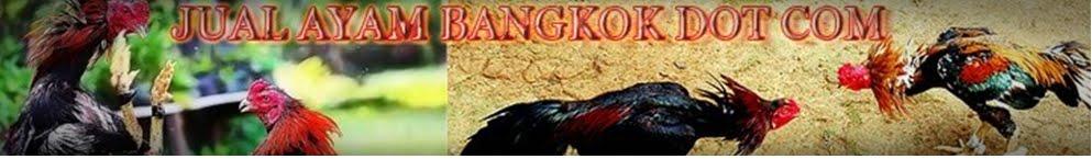 JUAL AYAM BANGKOK MURAH DAN BERKUALITAS