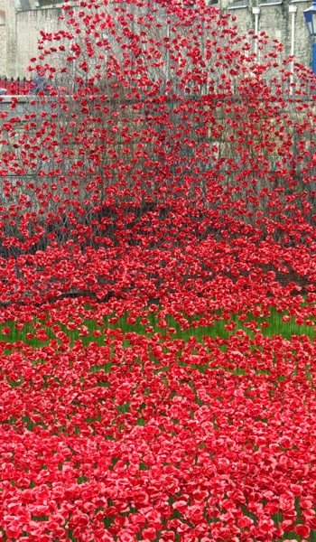 Poppies at the Tower of London, 3 November 2014, V. Oxberry