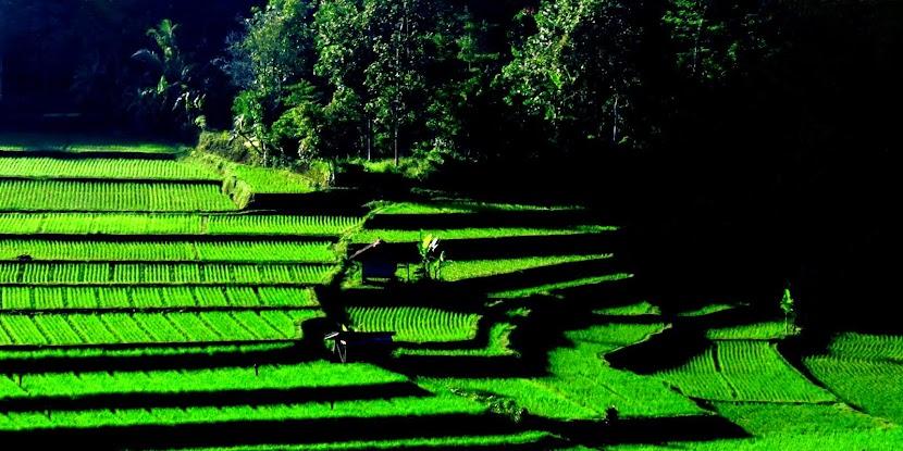 Desa ku yang Indah. 2014