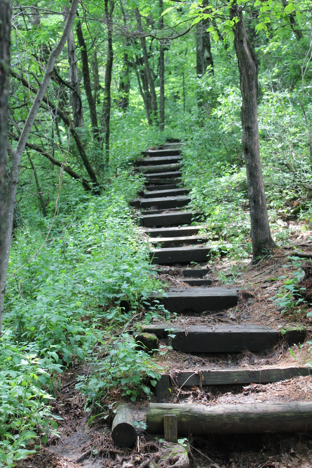 training wheels not included governor dodge state park wisconsin. Cars Review. Best American Auto & Cars Review