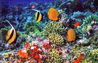 Keanekaragaman Biota Laut Indonesia