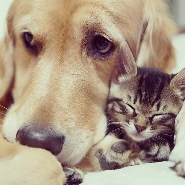inter-species animal friendships