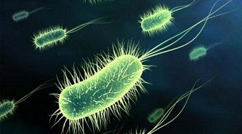 CÓMO-MATAR-A-LAS-BACTERIAS-que-causan-ardor-de-estómago-diarrea-distensión-abdominal-y-reflujo?