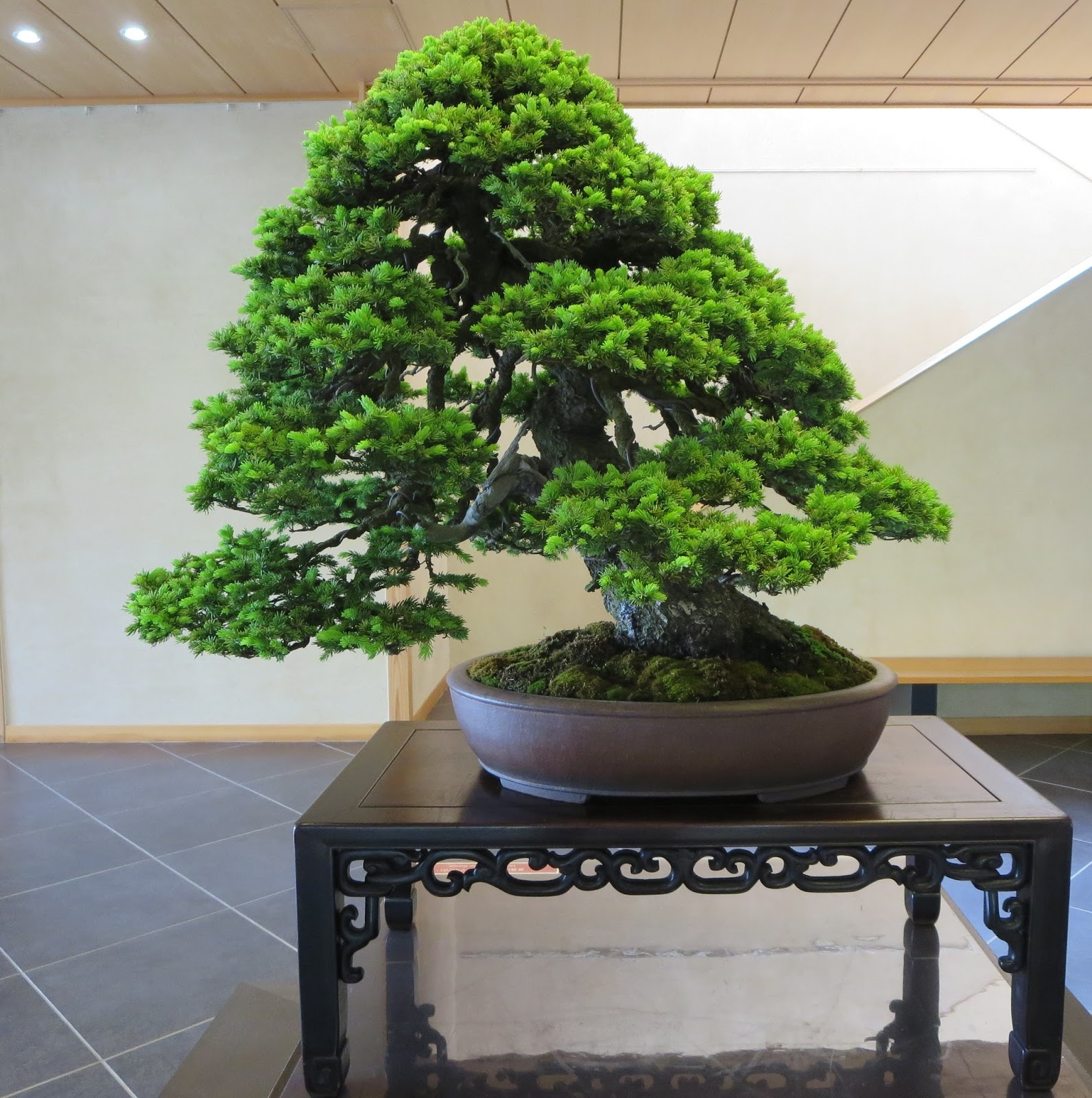 Akron Canton Bonsai Society June 2015