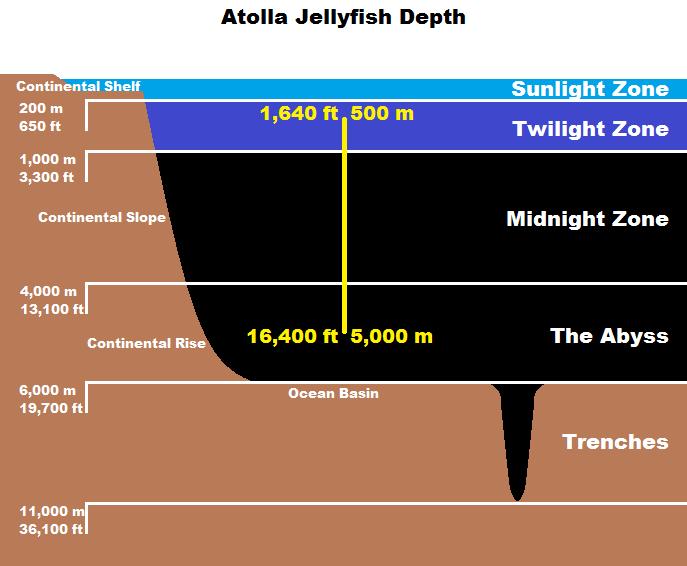 Real Monstrosities Atolla Jellyfish